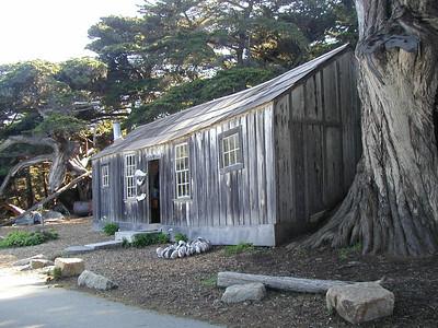 2003 February Point Lobos