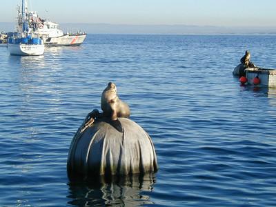 2003 January Whale watching