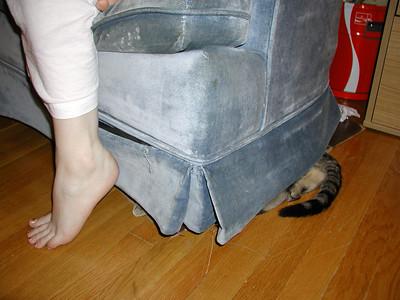wily_cat_hiding