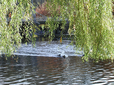 park_willow2
