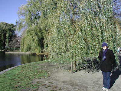small_tree_small_sarah