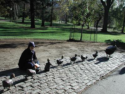 sarah_ducks