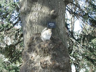 park_squirrel
