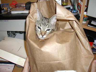 wily_in_a_bag