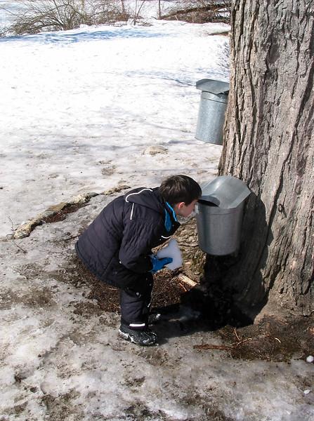 Benjamin examining the maple sap bucket