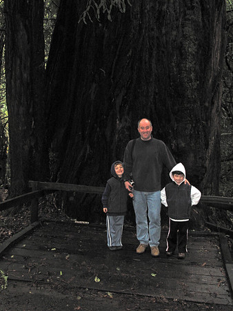 New Year's Day 2003 At Muir Woods