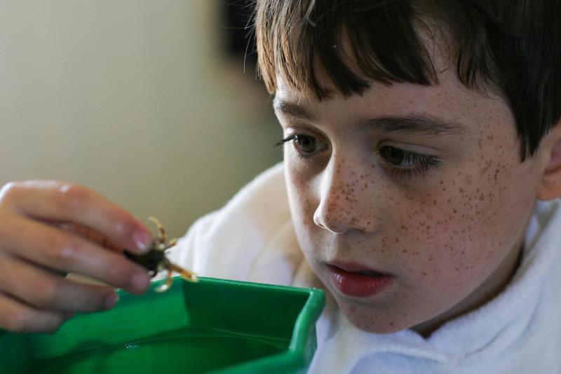 Benjamin examining a  hermit crab