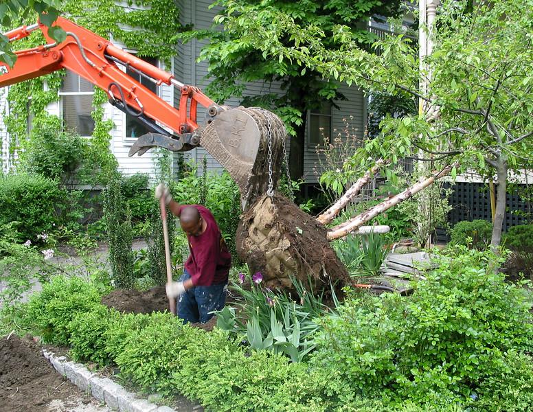 Planting a tree, digging a big hole!
