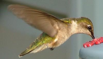 Beautiful little birds