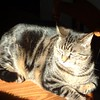 Phoebe sunning