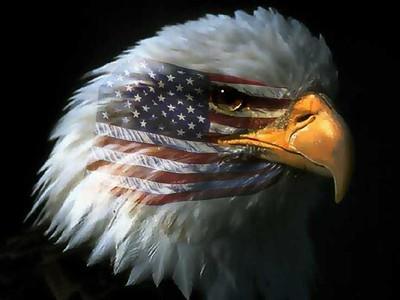eagle war