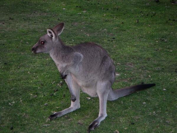 2003Australia11