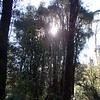 2003Australia66