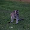 2003Australia9