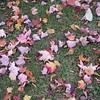 2003NewEnglandFoliage20