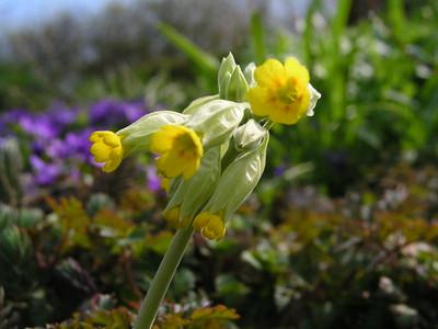 2004-04-18 Garten