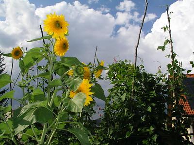 2004-08-28 Garten