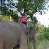 child_elephant.jpg