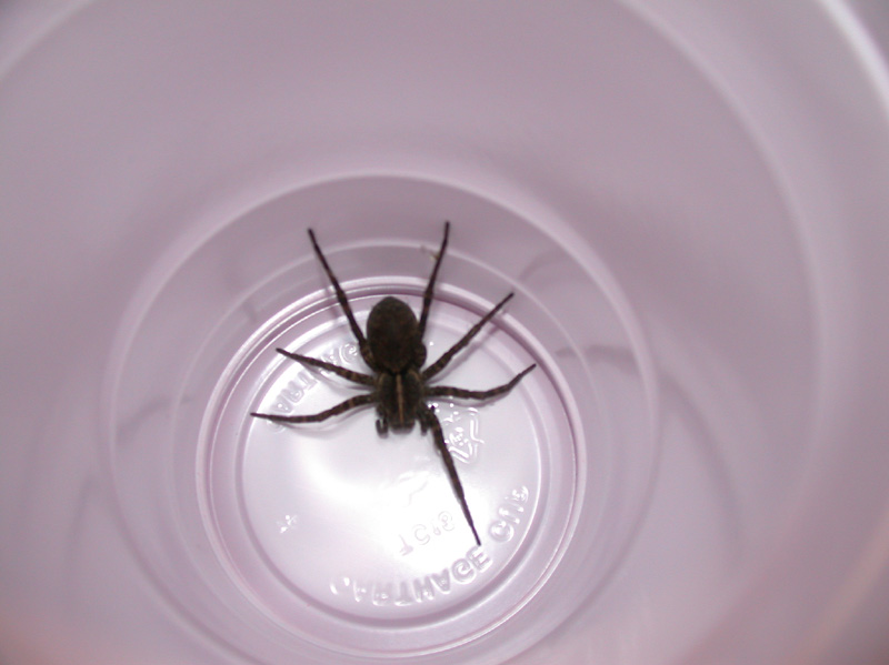 Evicting the bigass spider. Sorry man, you're not invited