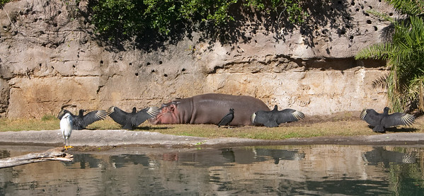 Guardians of Patrick The Hippo