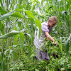 Weeding the Cornfield