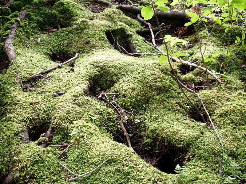 Color Moss