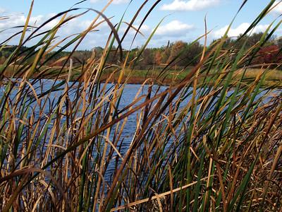 [A] Fall Nature Walk (Oct 2004)