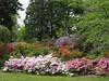 Arboretum: Azalea Way