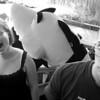 Shark, Shark, Sharrrrk Attack