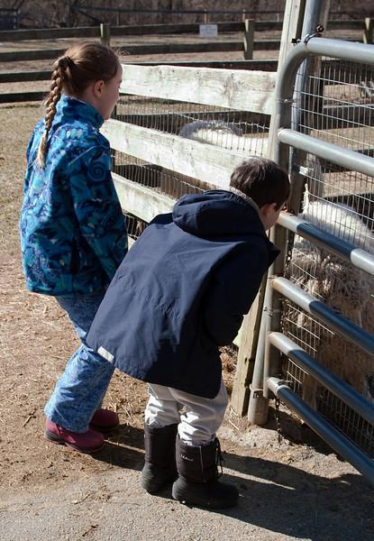Isabel and Benjamin looking at the sheep