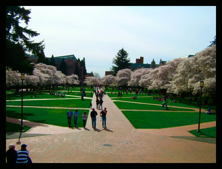 Cherry blossoms surround a park in Seattle, Washington.