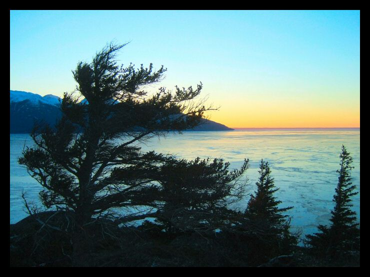 A Christmas Eve sunset colors the Turnagain Arm and a windworn tree clinging to the rocks near Anchorage.