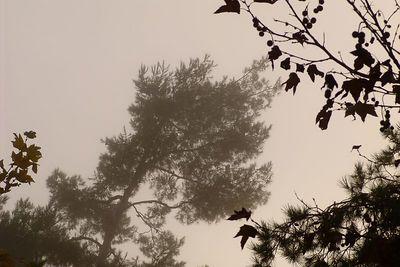 October. Morning. Fog.