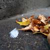 Fall Foliage Feather