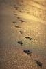 Footprints, Half Moon Bay, California