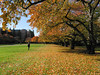 Cherry trees in Fall color on the Quad