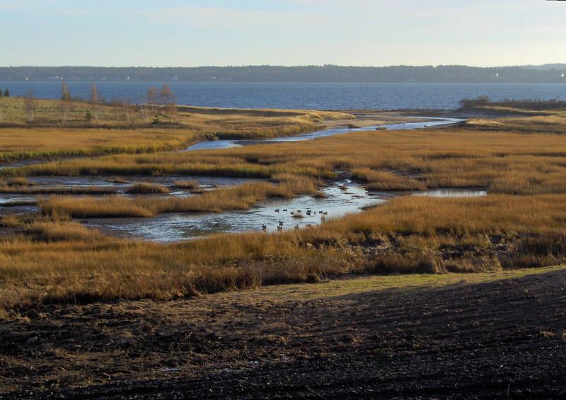 Marshes (wetlands)  near Blue Rocks.