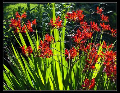 Garden Flowers 2005/6