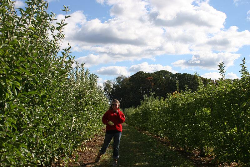 Terhune Orchard