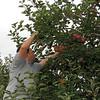 2007-10-14 | Turkey Farm - NJ- Yaz & JJ