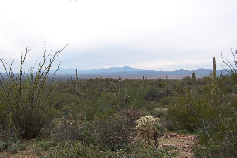 Az Trip - Desert 021