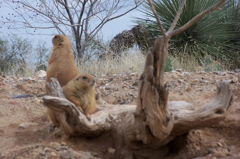 Az Trip - Desert 015