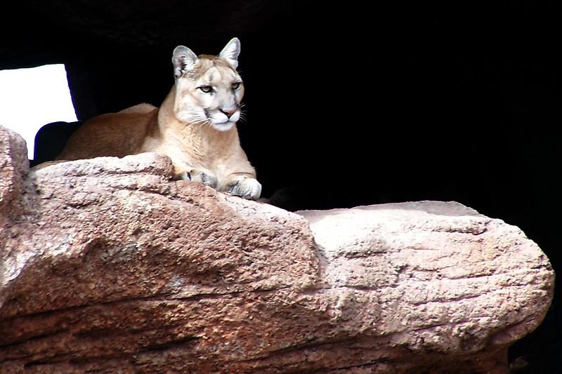 Az Trip - Desert Lion