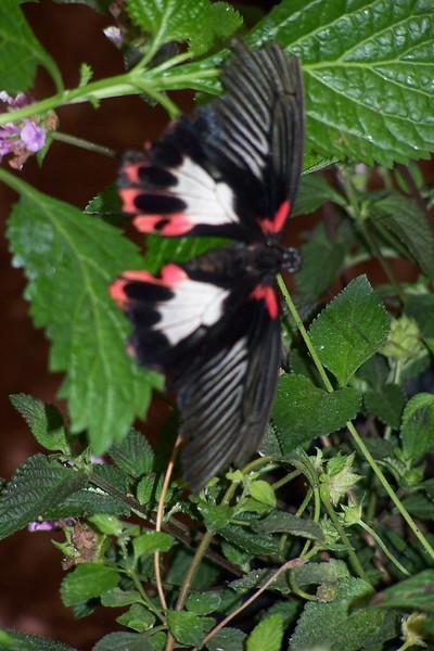 Az Trip - Butterfly Exibit & Rain Strom 003