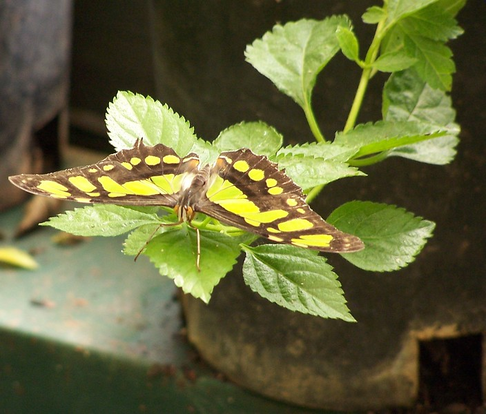 Az Trip - Butterfly Exibit & Rain Strom 009