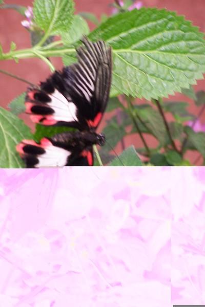 Az Trip - Butterfly Exibit & Rain Strom 002