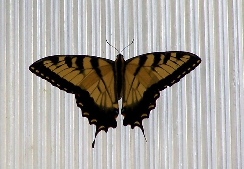 Az Trip - Butterfly Exibit & Rain Strom 005