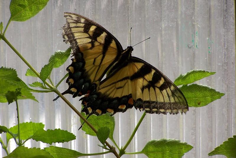 Az Trip - Butterfly Exibit & Rain Strom 007