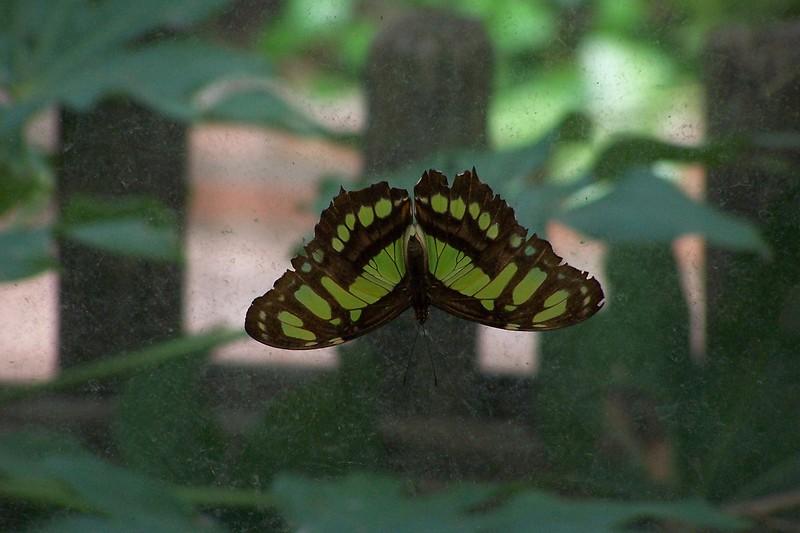 Az Trip - Butterfly Exibit & Rain Strom 004