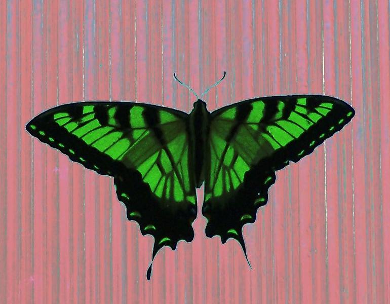 Az Trip - Butterfly pink & green